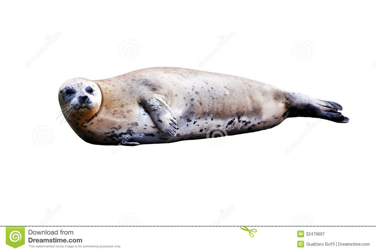 Isolated Seal Royalty Free Stock Photography - Image: 32479697