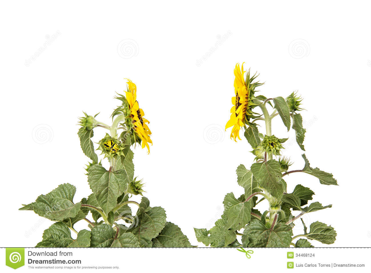 sunflower chatrooms Welcome to epilepsycom's new chat room it's easy to use and offers a number of features welcome  sunflower syndrome - a photosensitive epilepsy.
