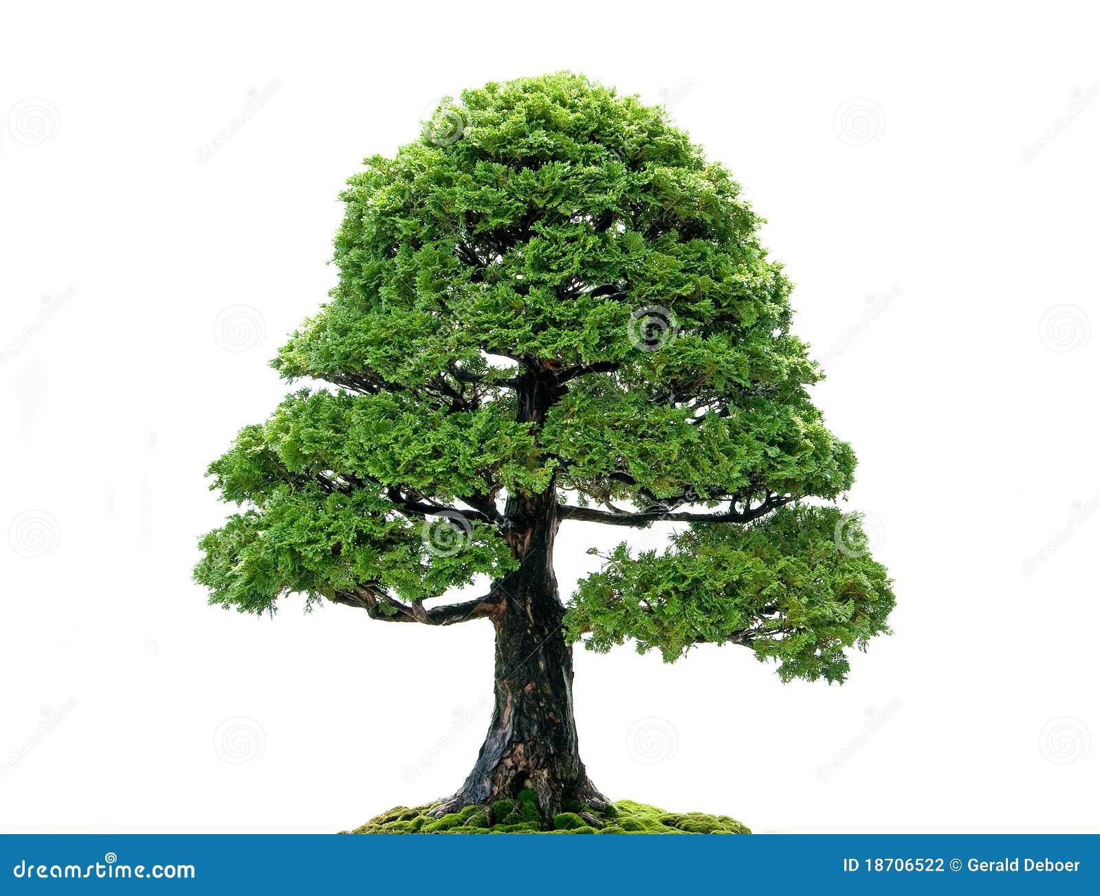 Isolated Tree Stock Photography Image 18706522