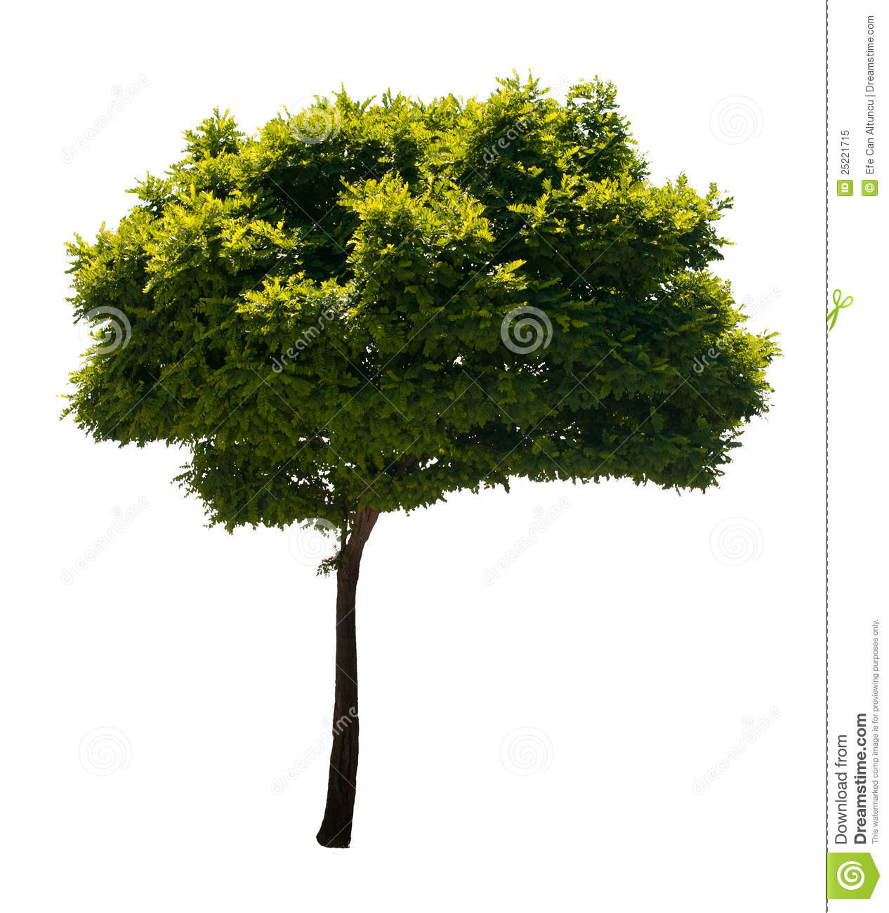 Photo of a tree, isolated on white background. PNG file with full ...