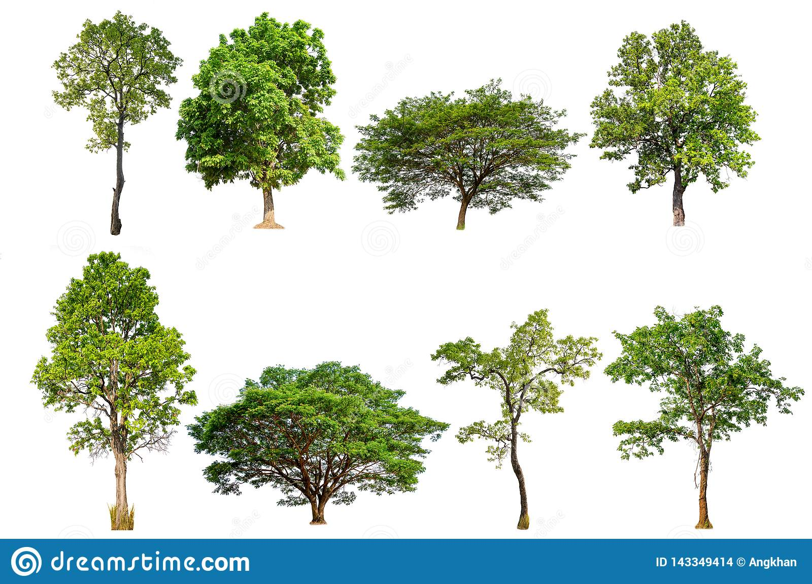 Isolated tree collection