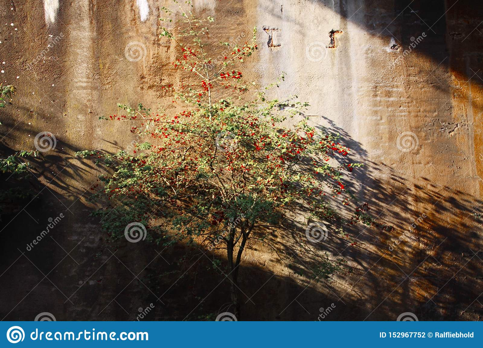 Landschaftspark Duisburg, Germany: Isolated tree with red berries in an abandoned tunnel shining bright in sunlight and casting