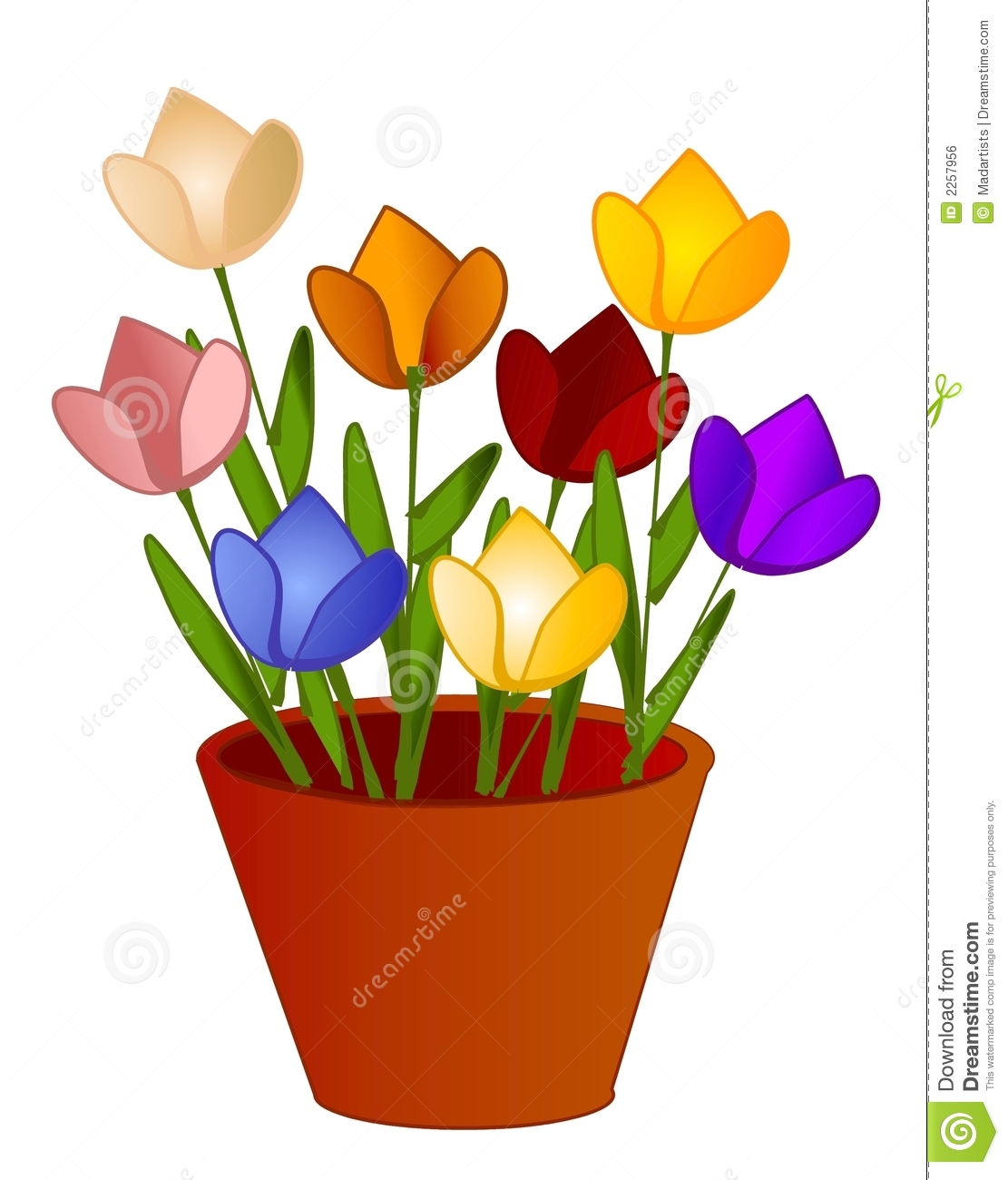 Isolated Tulips Flowers In Pot Royalty Free Stock Image
