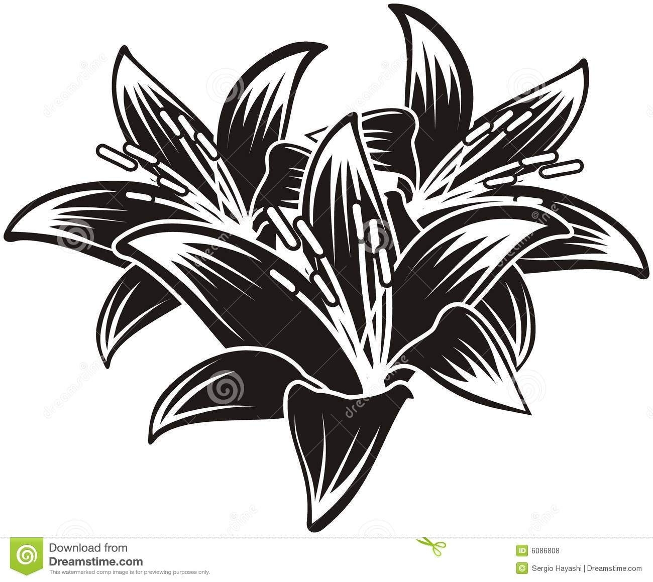 Isolated Vector Tropical Flowers
