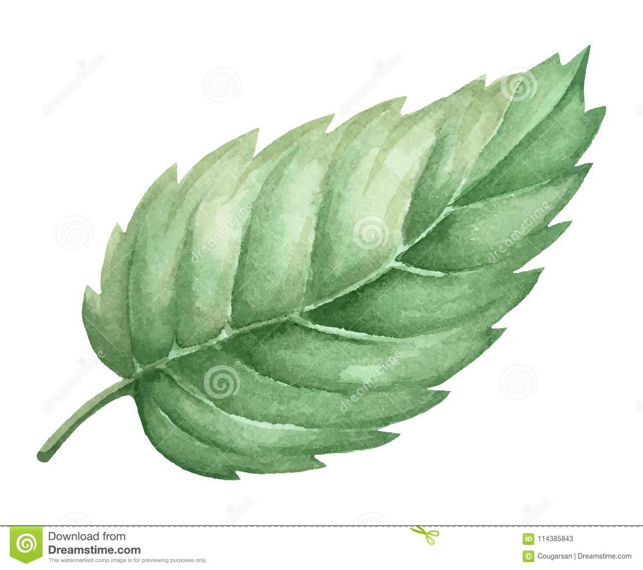 Isolated watercolor green plant leaf deocration