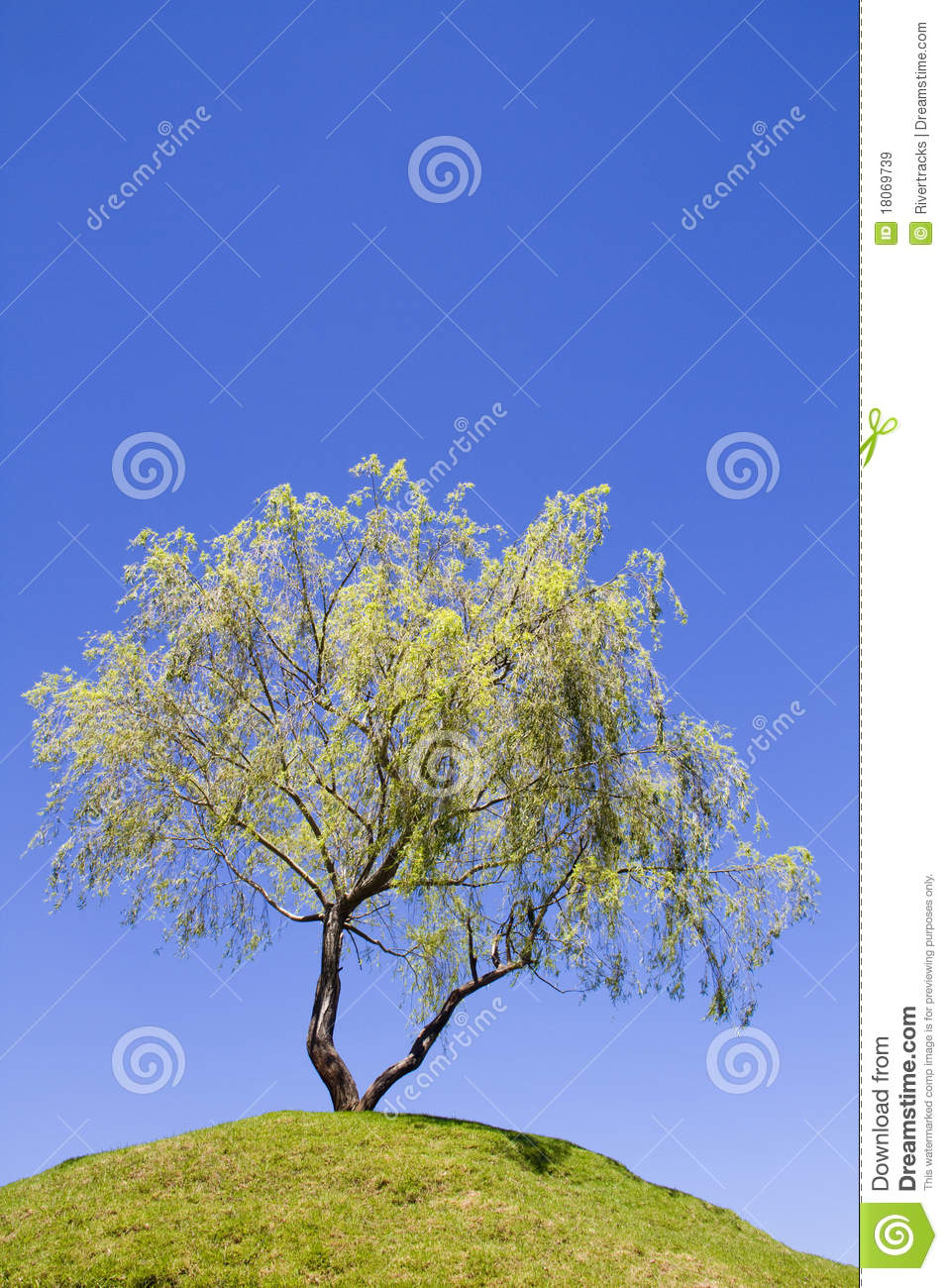 Isolated weeping willow tree on a hill
