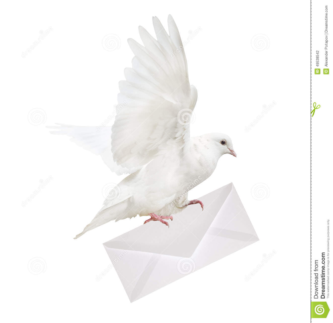 isolated white dove carrying envelope stock photo