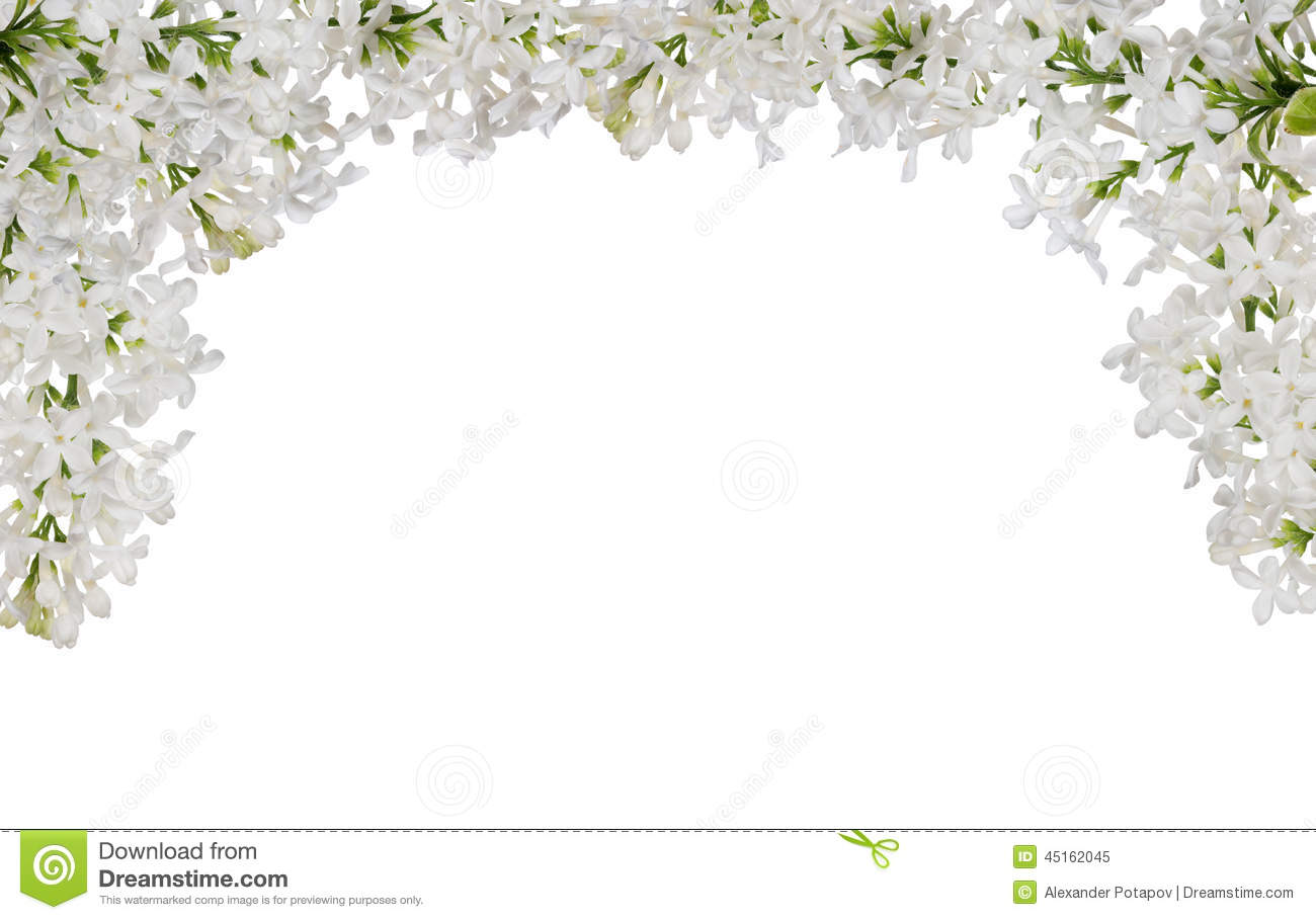 Isolated White Lilac Flower Half Frame Stock Image - Image of nobody ...