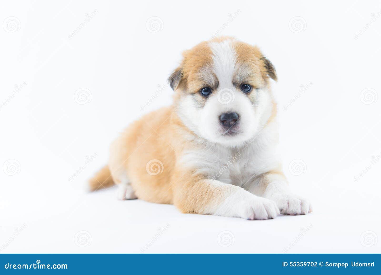 Isolato del cucciolo del cane del ritratto