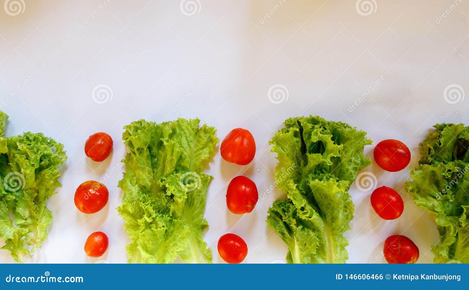 Isolato del pomodoro della lattuga su fondo bianco