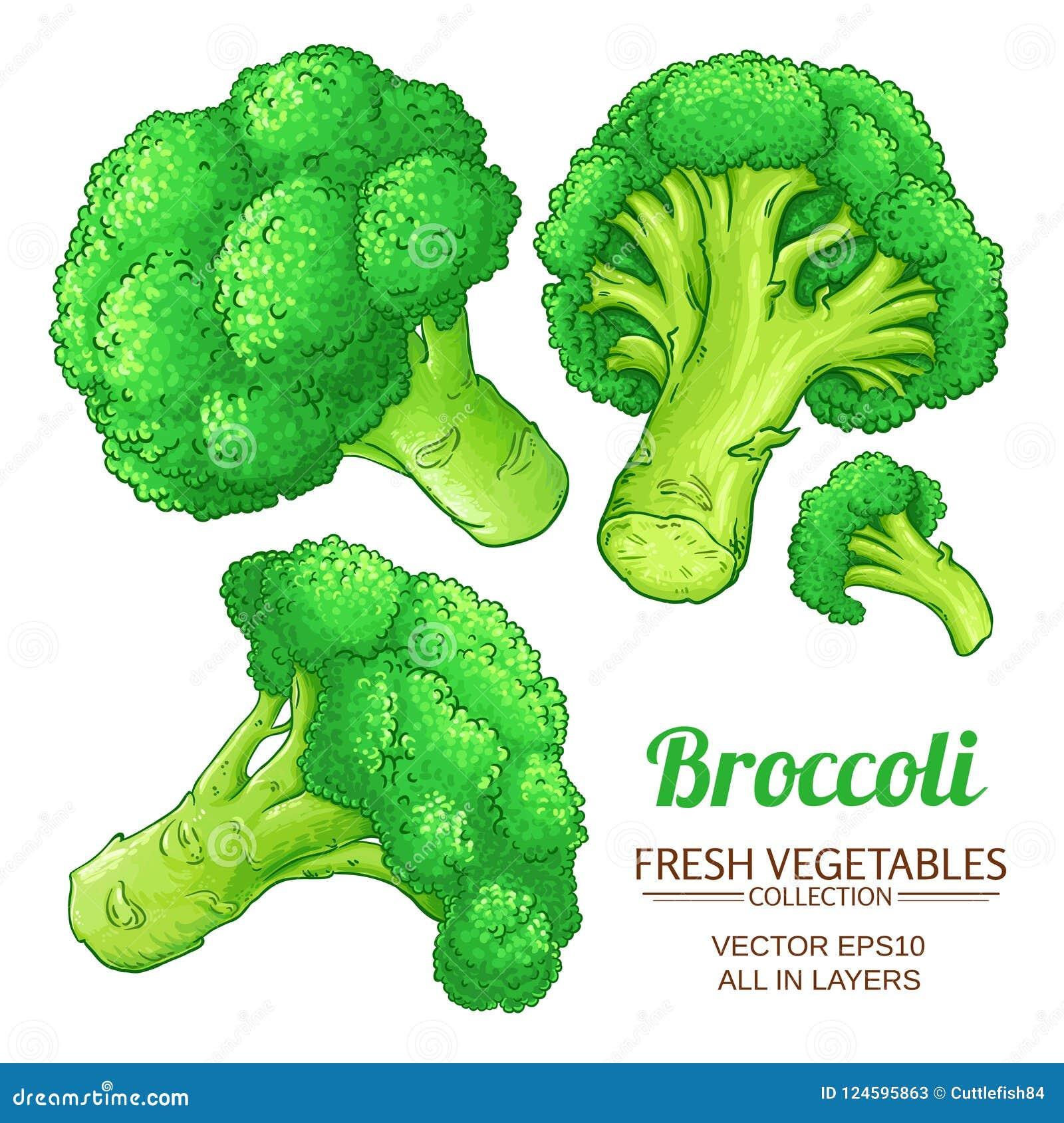 Isolerad broccolivektor