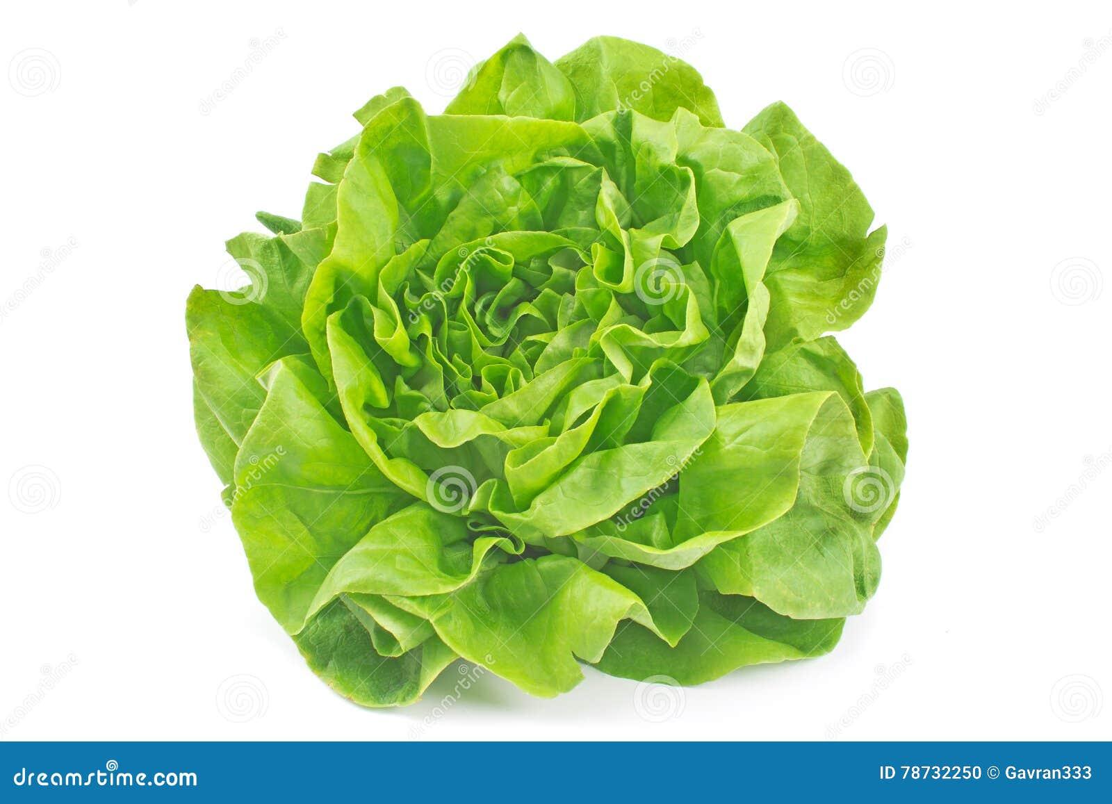 Isolerad grönsallatgrönsak