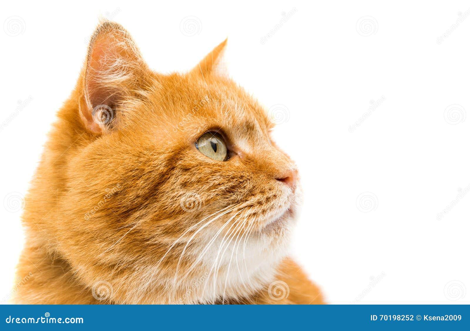 Isolerad kattingefära