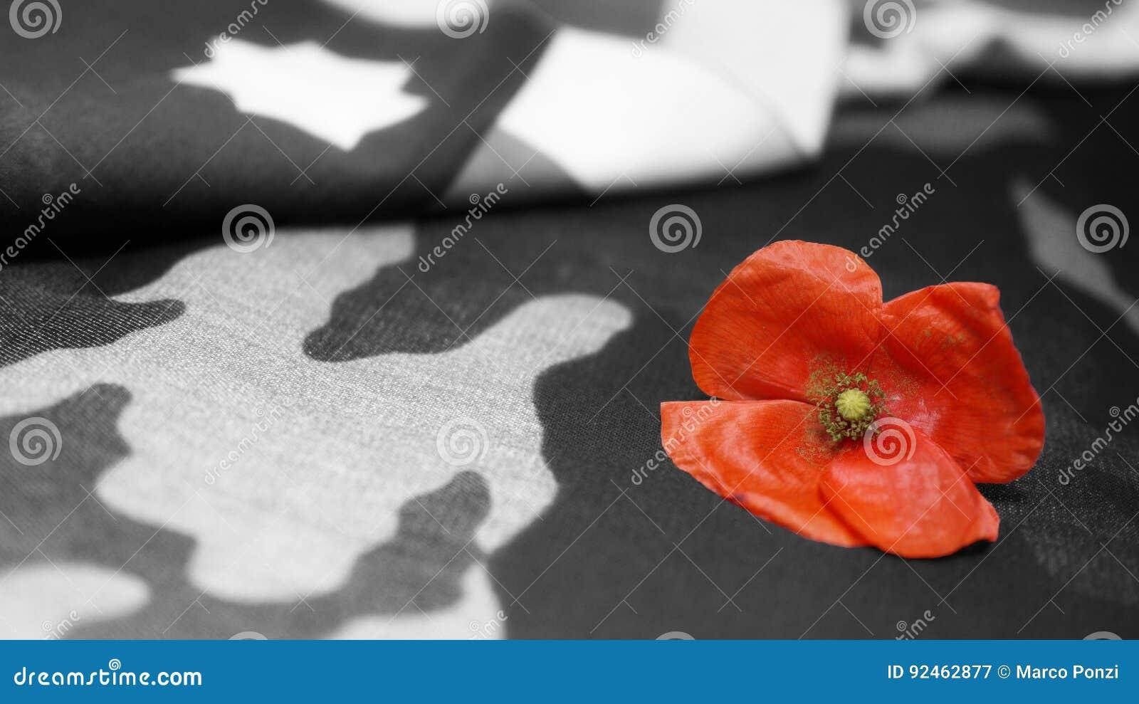 Isolerad minnes- white för affischtavla dag Poppy Flower Usa Flag