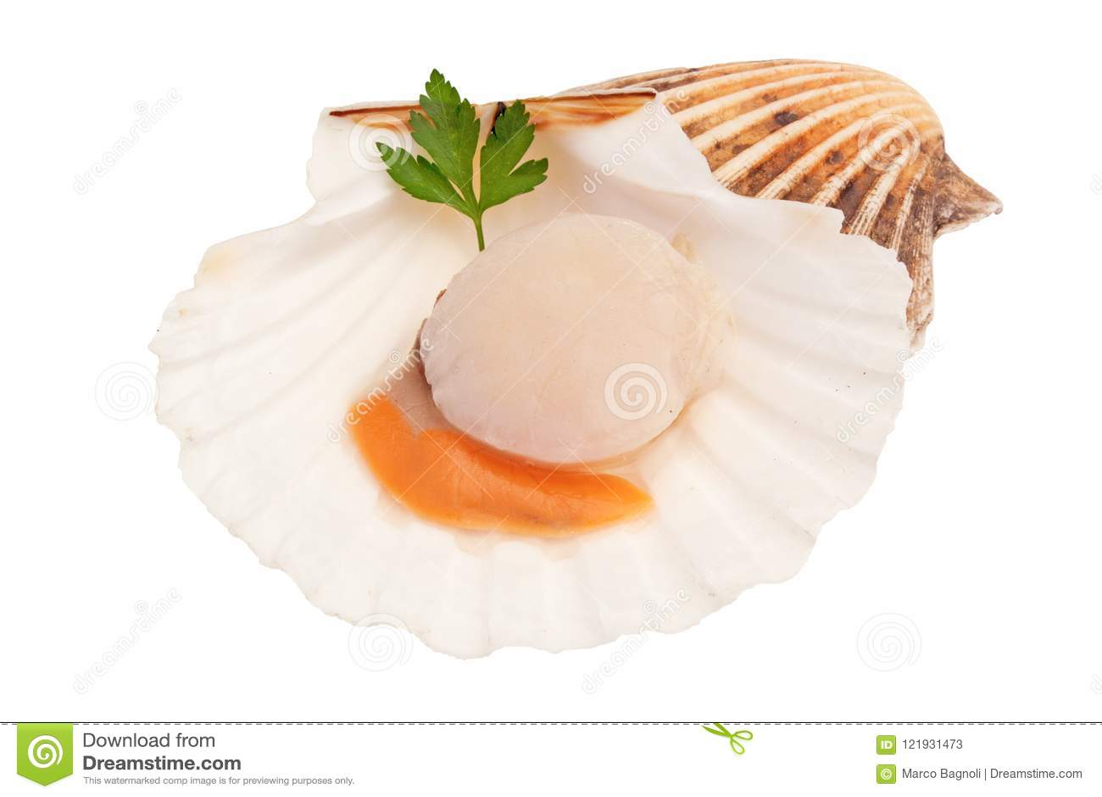 Isolerad ny rå kammussla - skaldjur