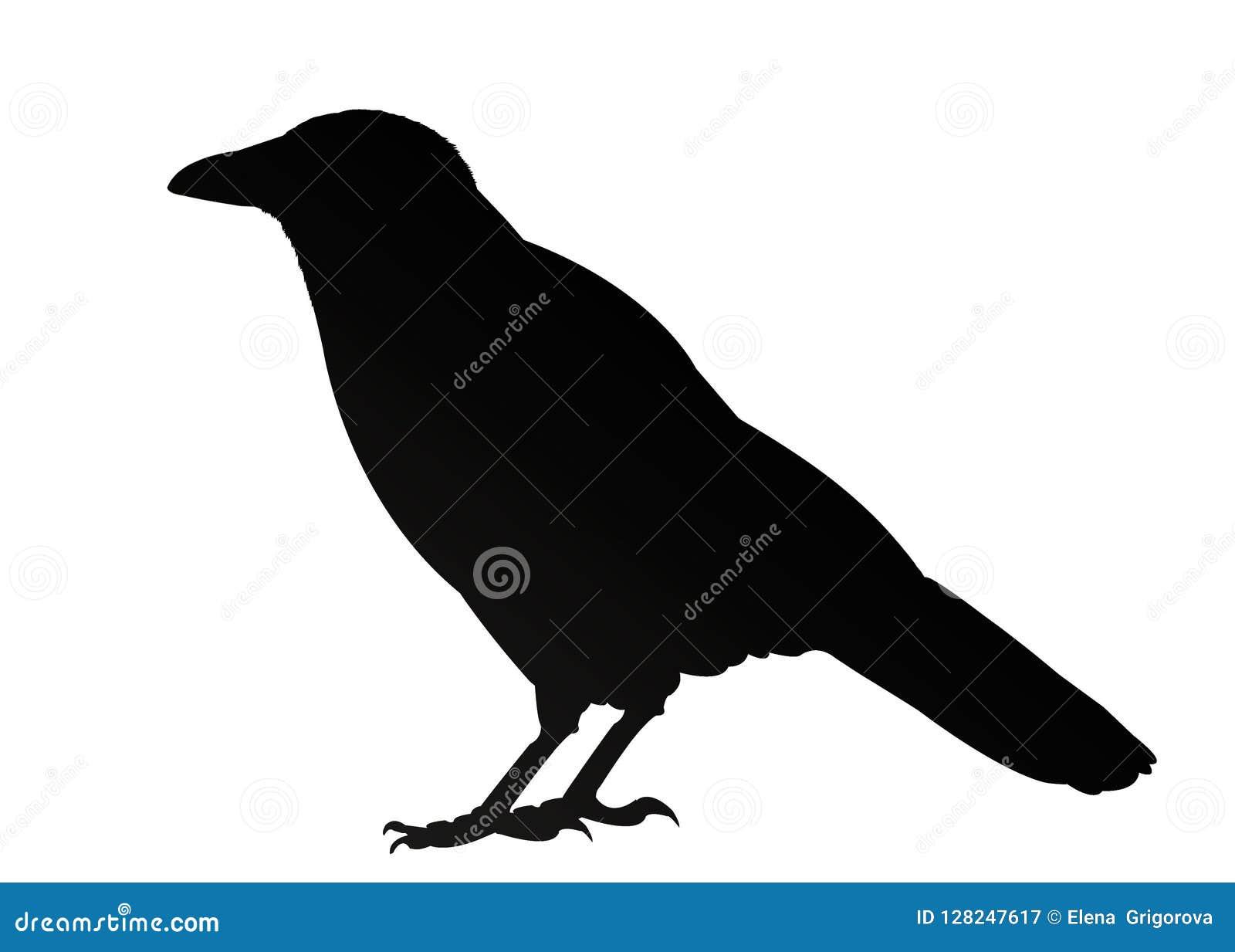 Isolerad svart galandekontur på vit bakgrund illustration