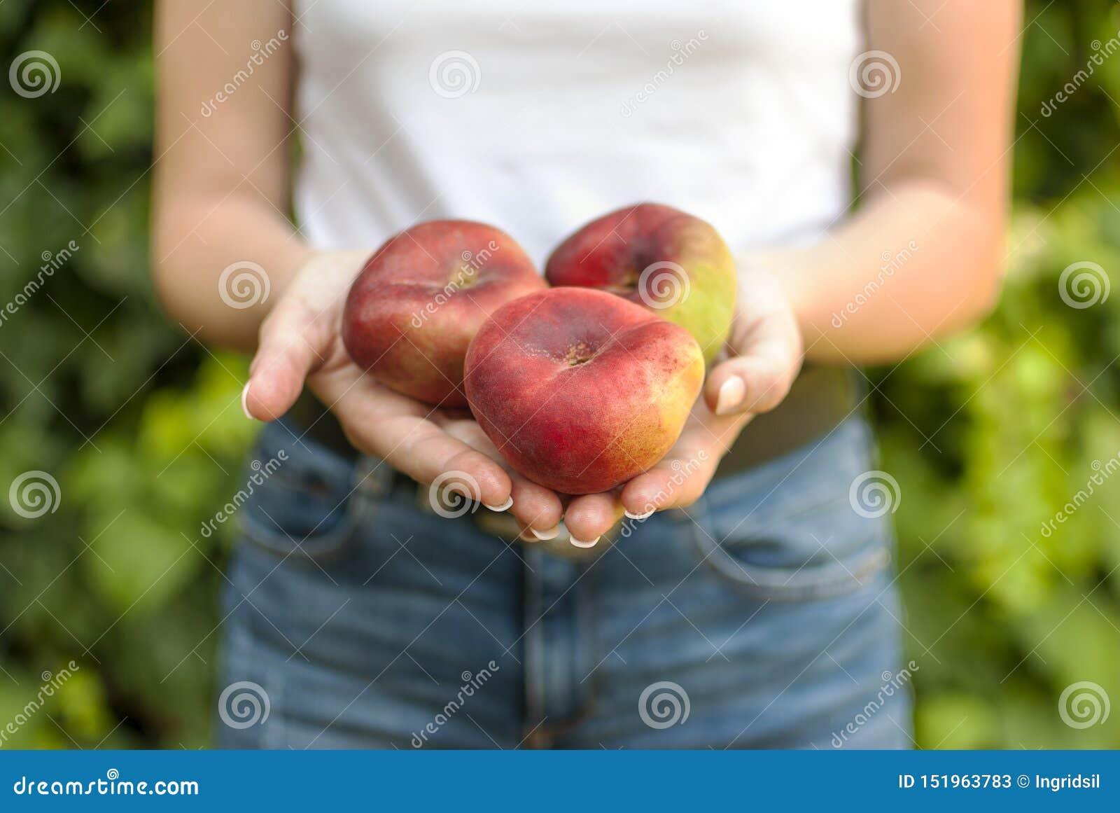 Isolerad ung kvinna som rymmer några röda plana persikor i hennes händer Prunus Persica platycarpa Kinesisk plan persika Variatio