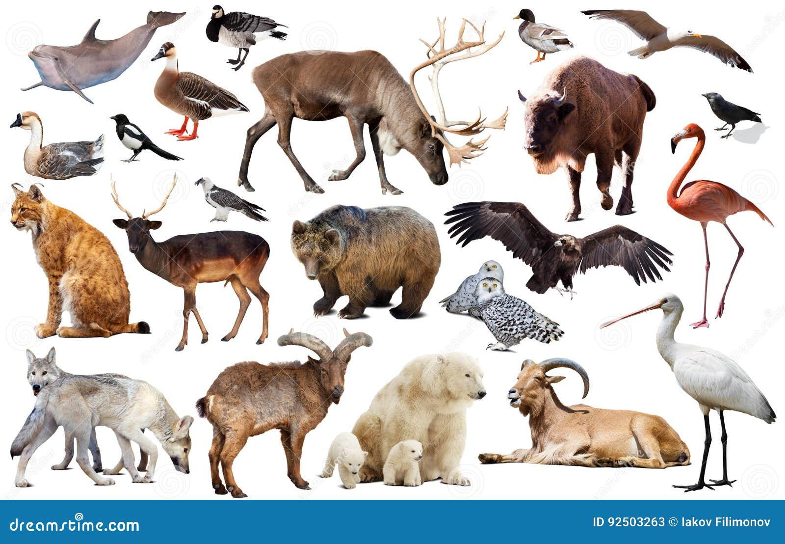djur i europa
