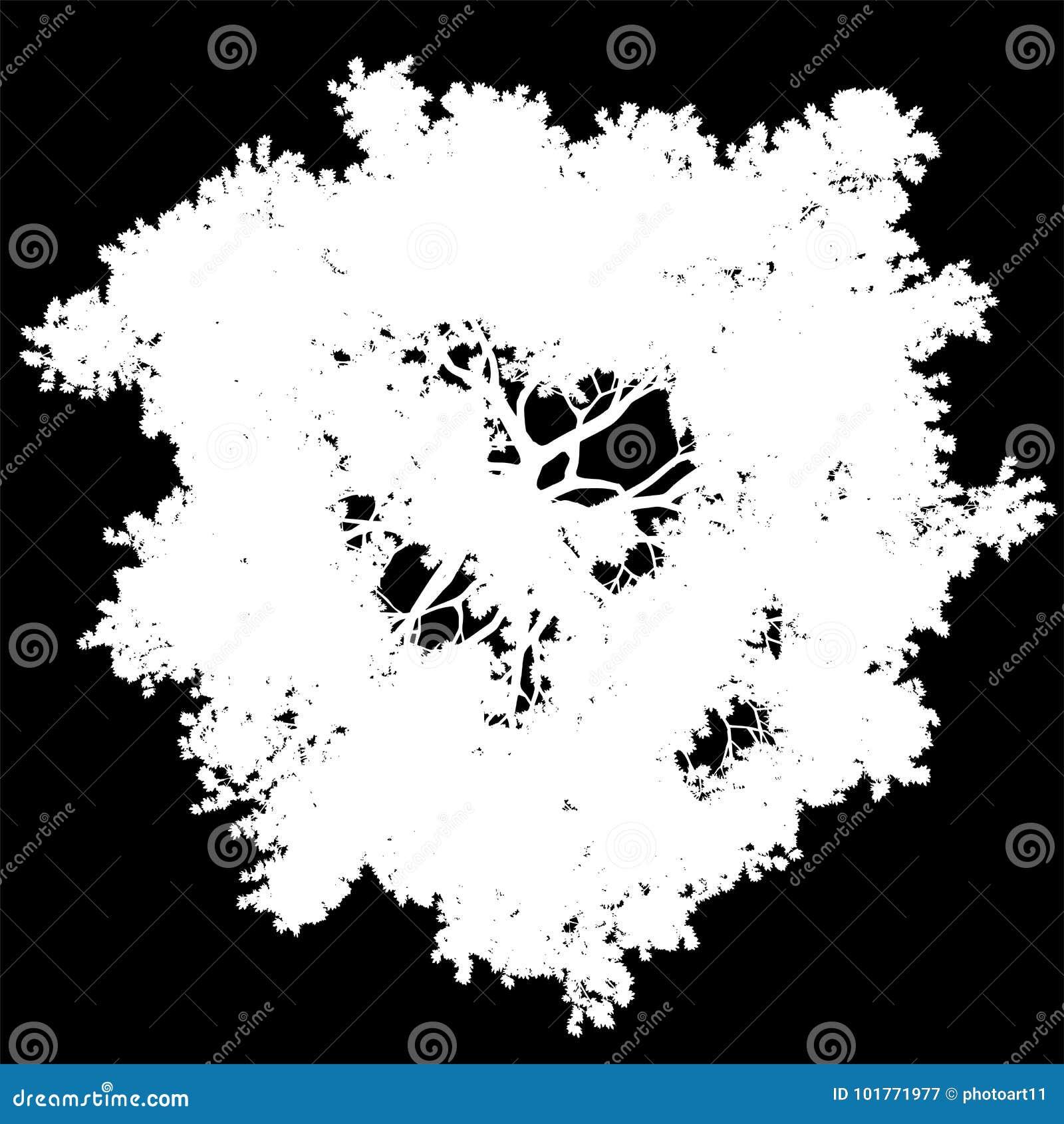Isolerade konturn för den bästa sikten för trädet - vit - vektorn