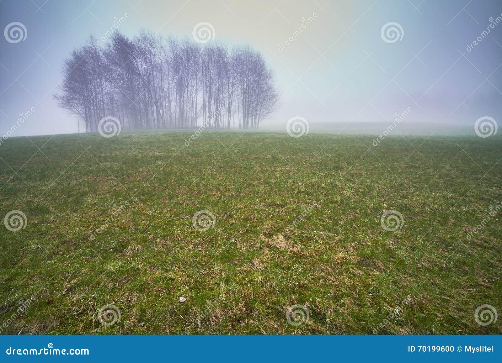 Isolerade träd i en äng