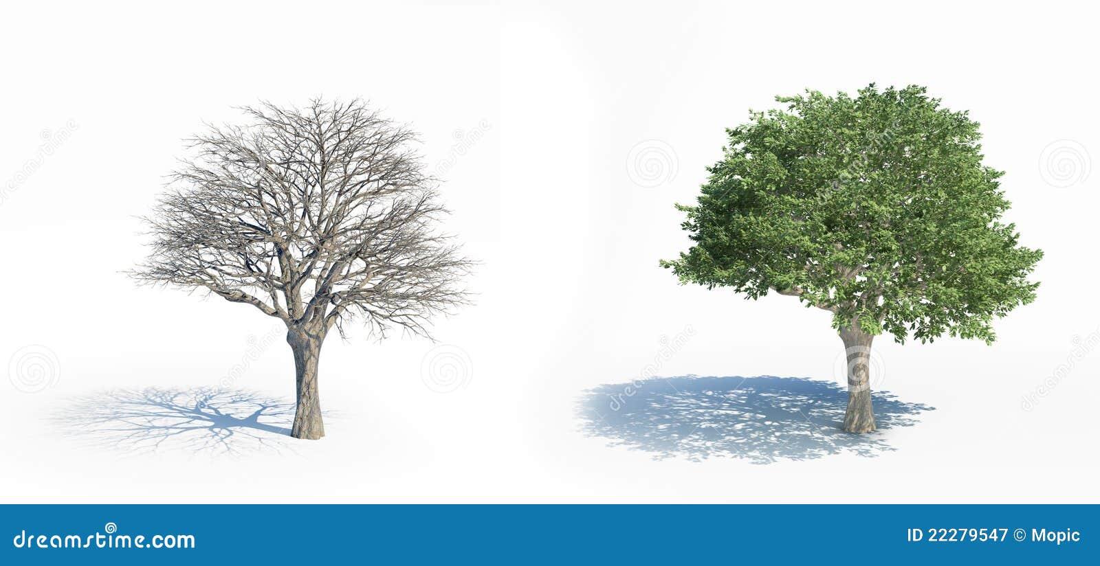 Isolerade trees två