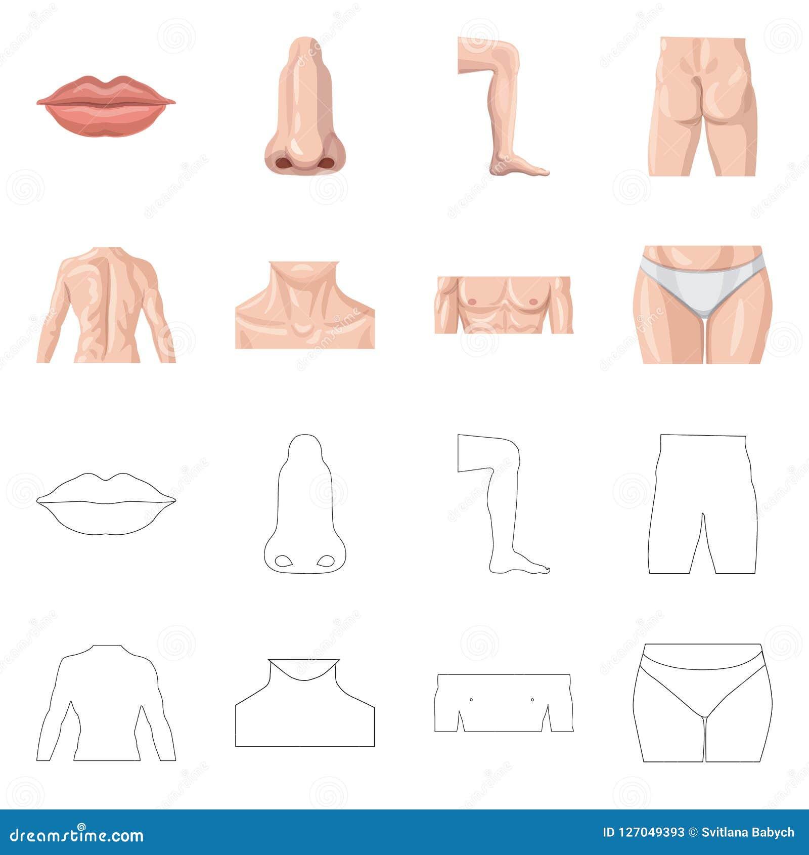 Isolerat objekt av människa- och delsymbolen Samling av människa- och kvinnavektorsymbolen för materiel