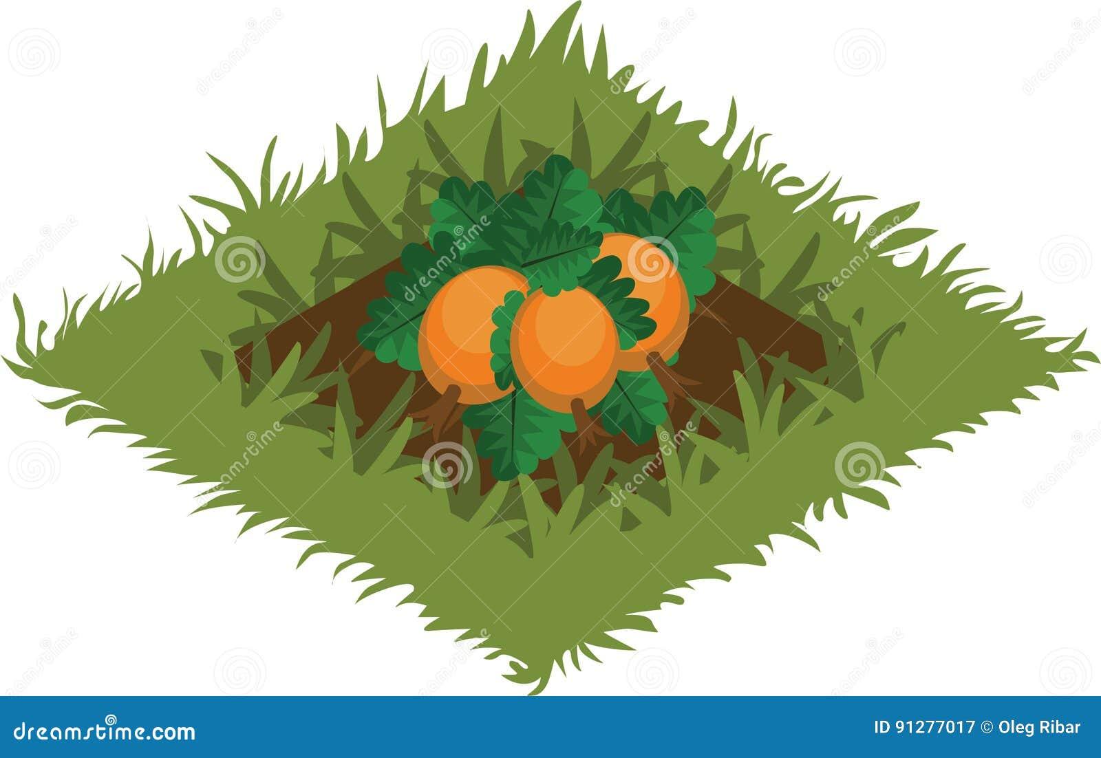 Isometrisk säng för tecknad filmgrönsakträdgård som planteras med pumpa - beståndsdelar för den Tileset översikten