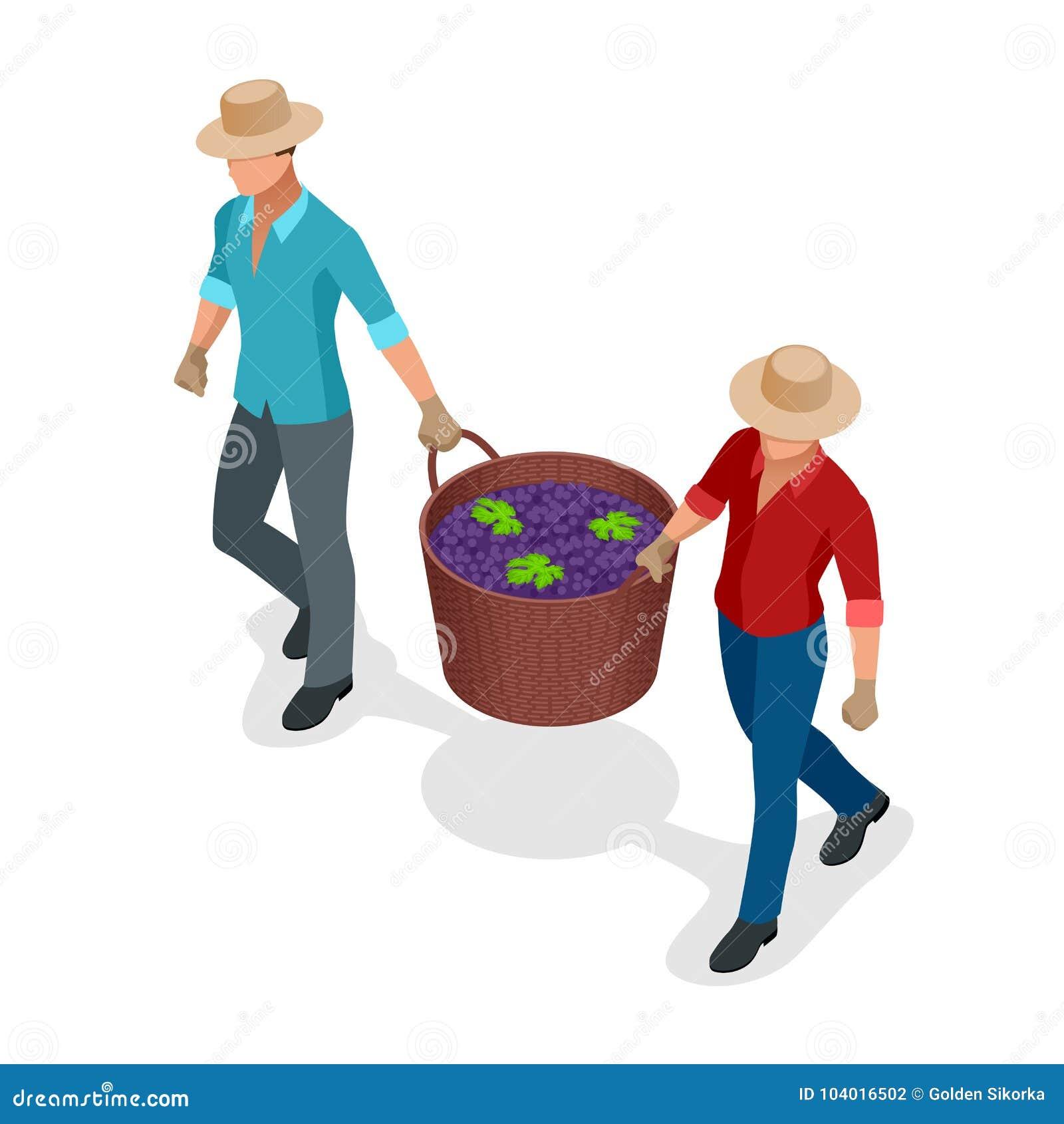 Isometriska arbetare som skördar druvor under druvorna för vin för vinskördblått i vide- korgar Isolerat objekt i lägenhet