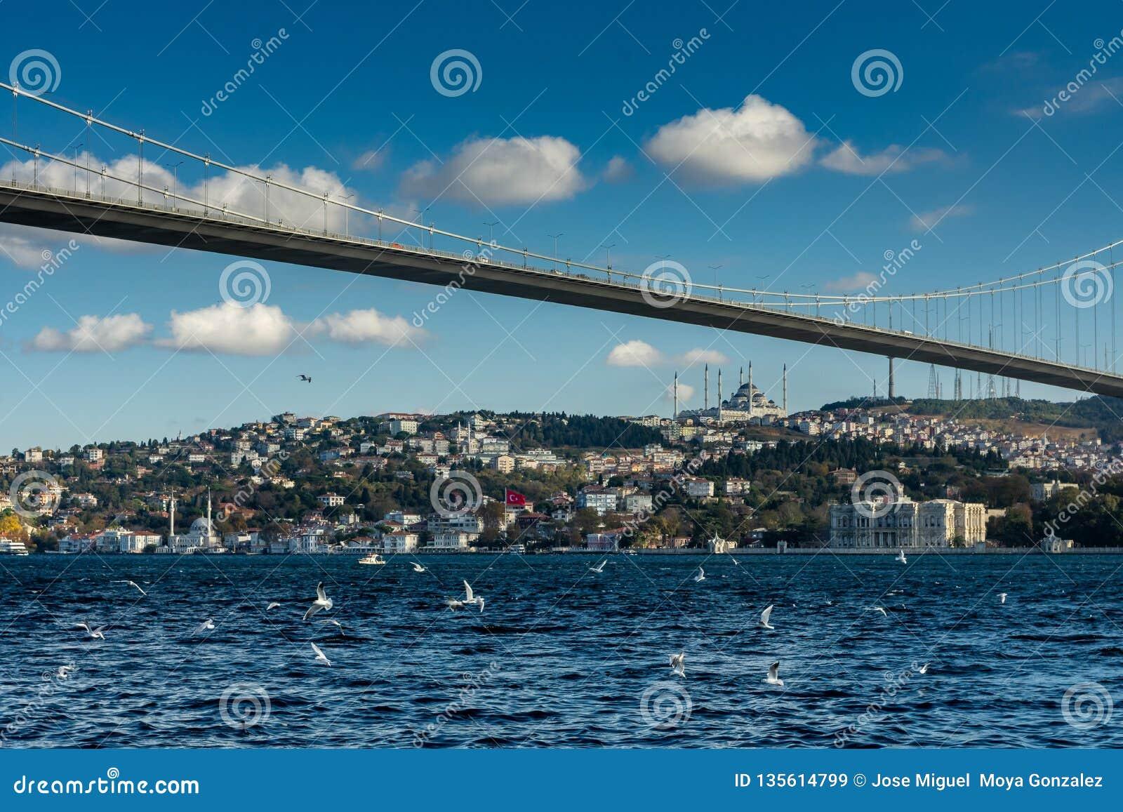 Istanbul, die Türkei 12-November-2018 Vögel, die über Bosphorus-Fluss, Ortakoy-Brücke und Moschee fliegen