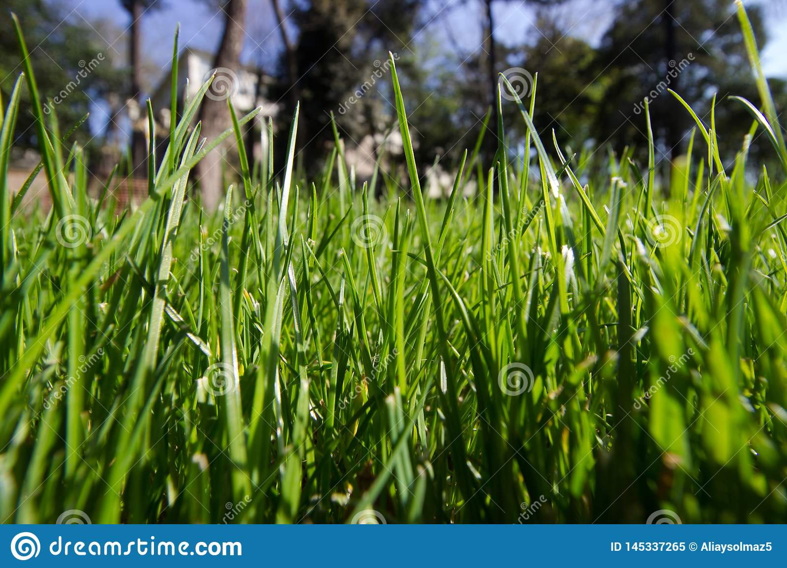 Spring Time for Istanbul April 2019, Grassy Field, Bright and Sunny Day.