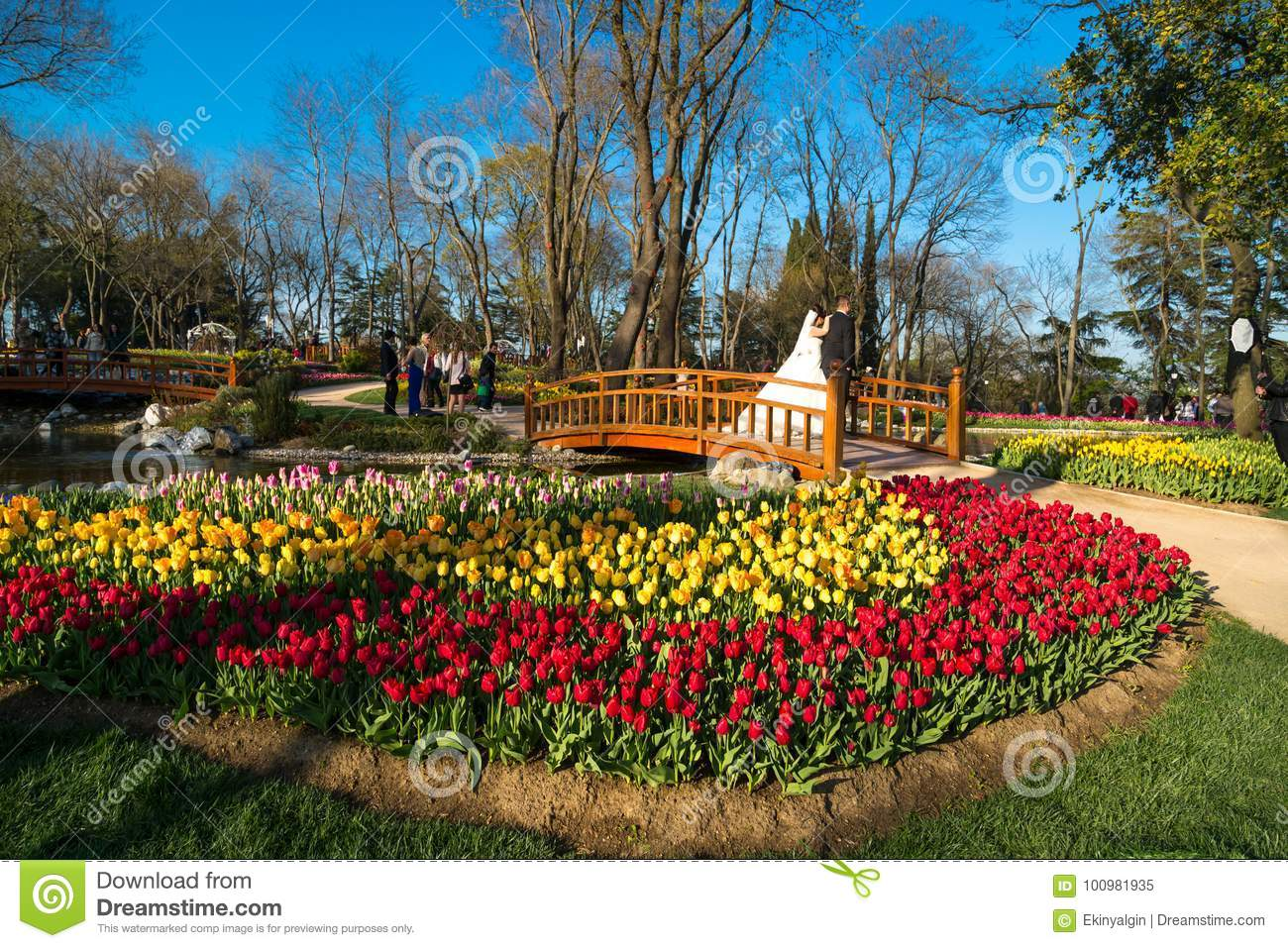 Tulip Gardens In Emirgan Parc Editorial Image - Image of green ...