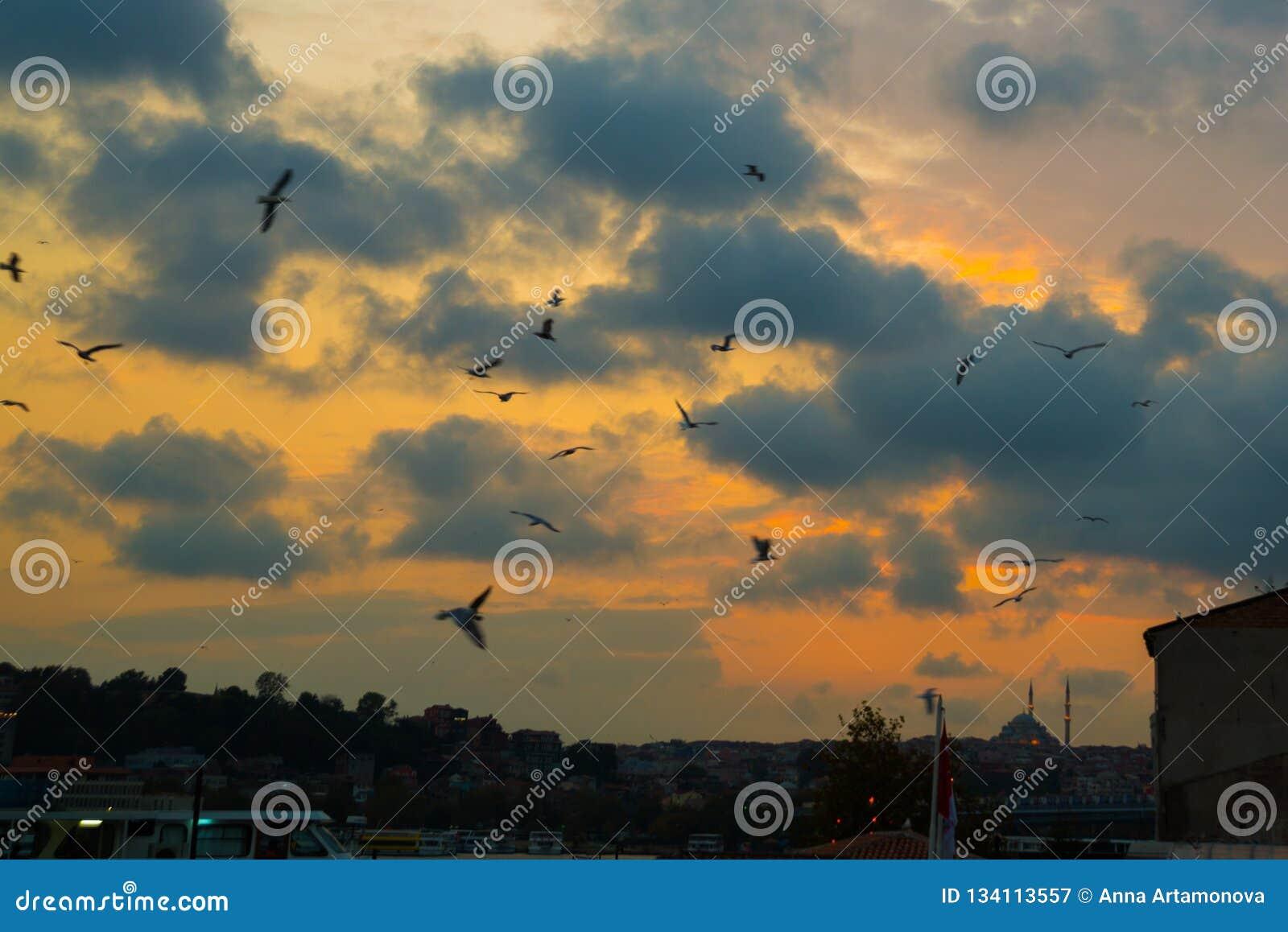 Istanbul, Turquie : Beaux oiseaux de ciel nocturne et de vol, mosquée dans la distance