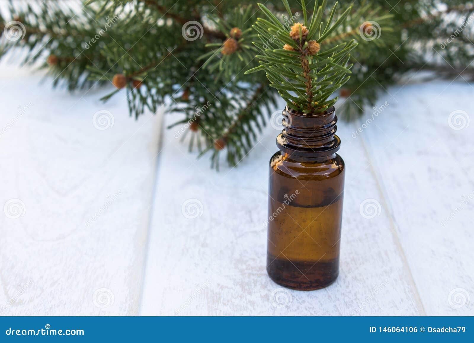 Istotny iglasty olej w ciemnej butelce, butelka ekstrakt, sosna rozga??zia si?