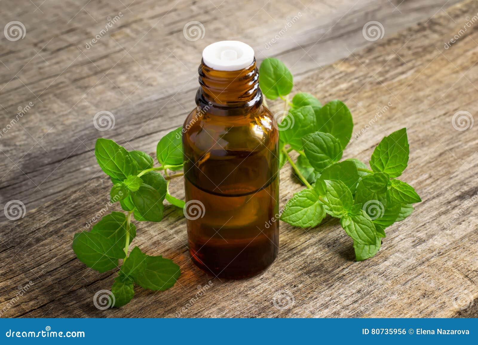 Istotny olej miętówka w małej butelce z świeżą mennicą