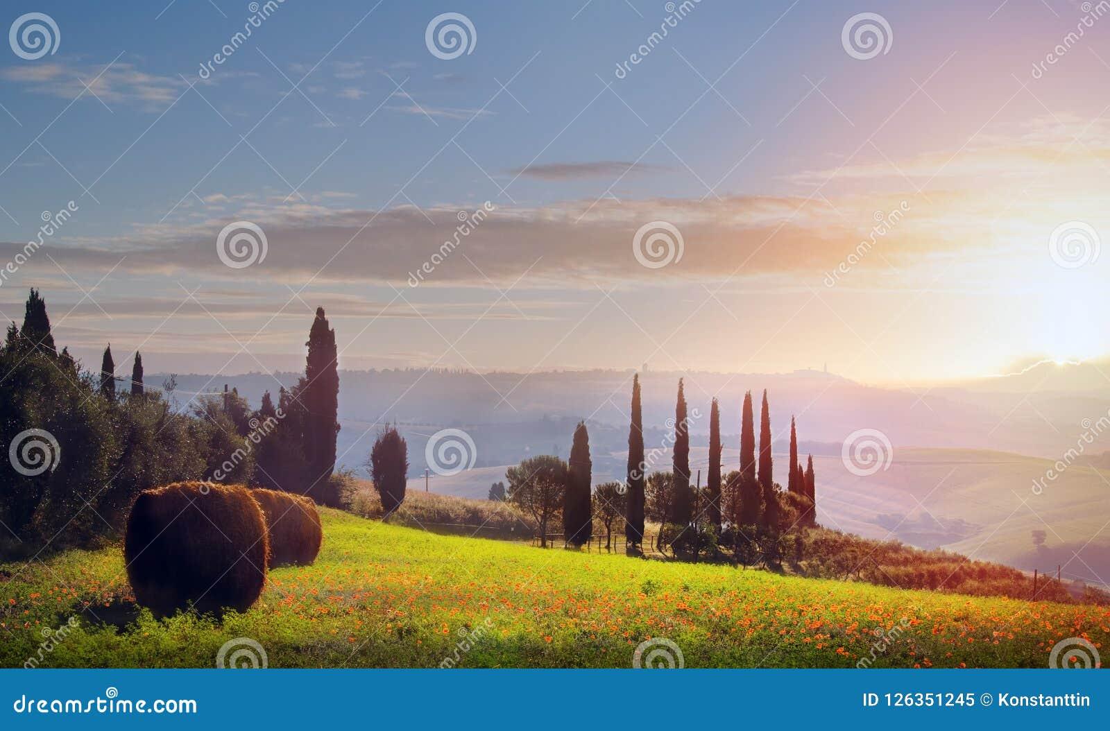 Italia Tierras de labrantío de Toscana y árbol de aceitunas; tierra del campo del verano