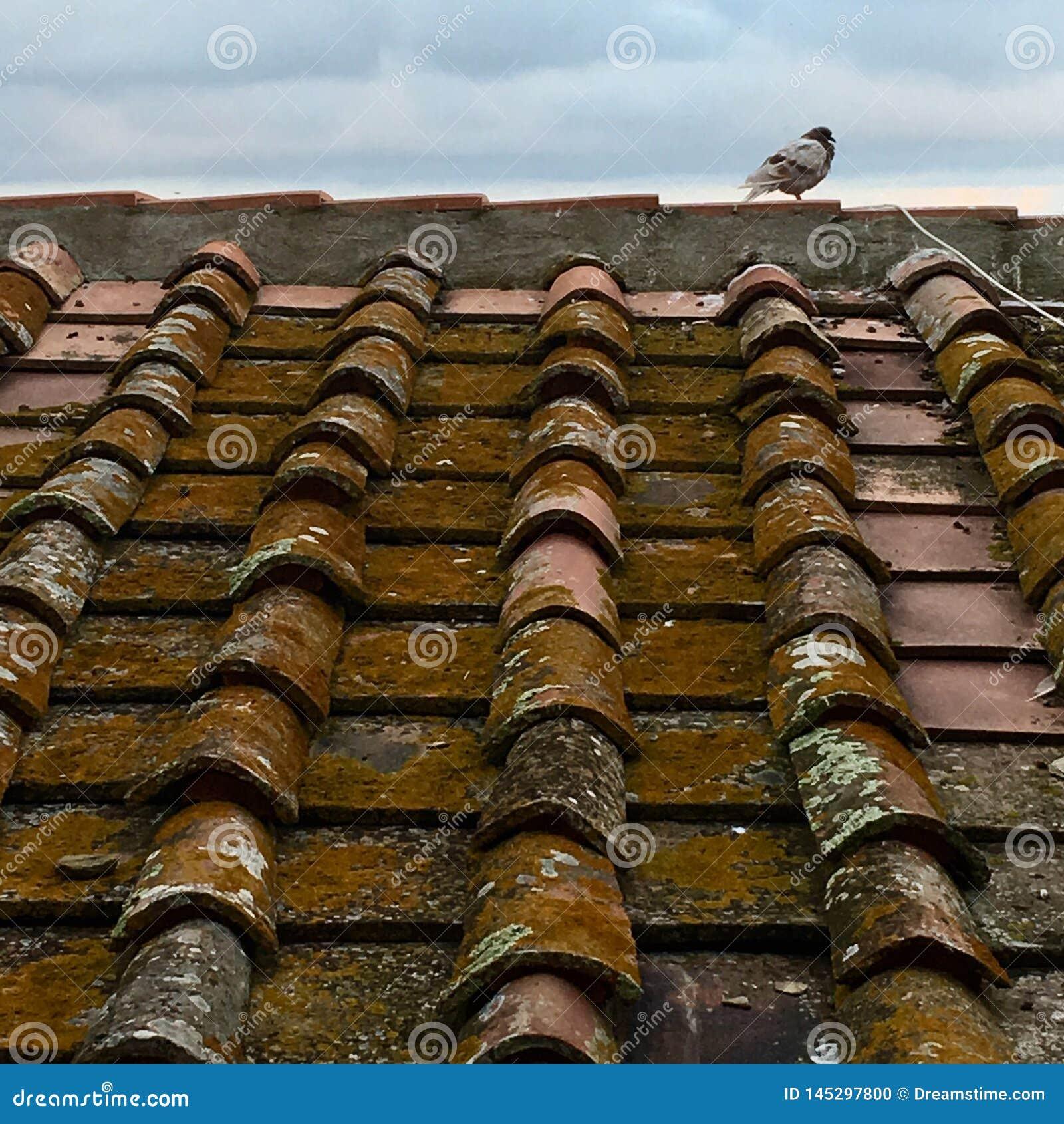 Italiaans dak