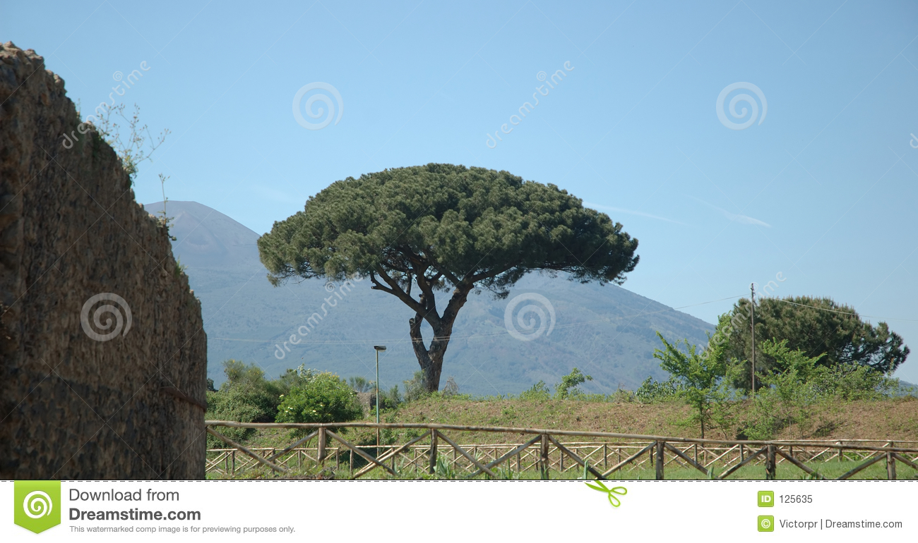 Italian Tree Royalty Free Stock Photo - Image: 125635