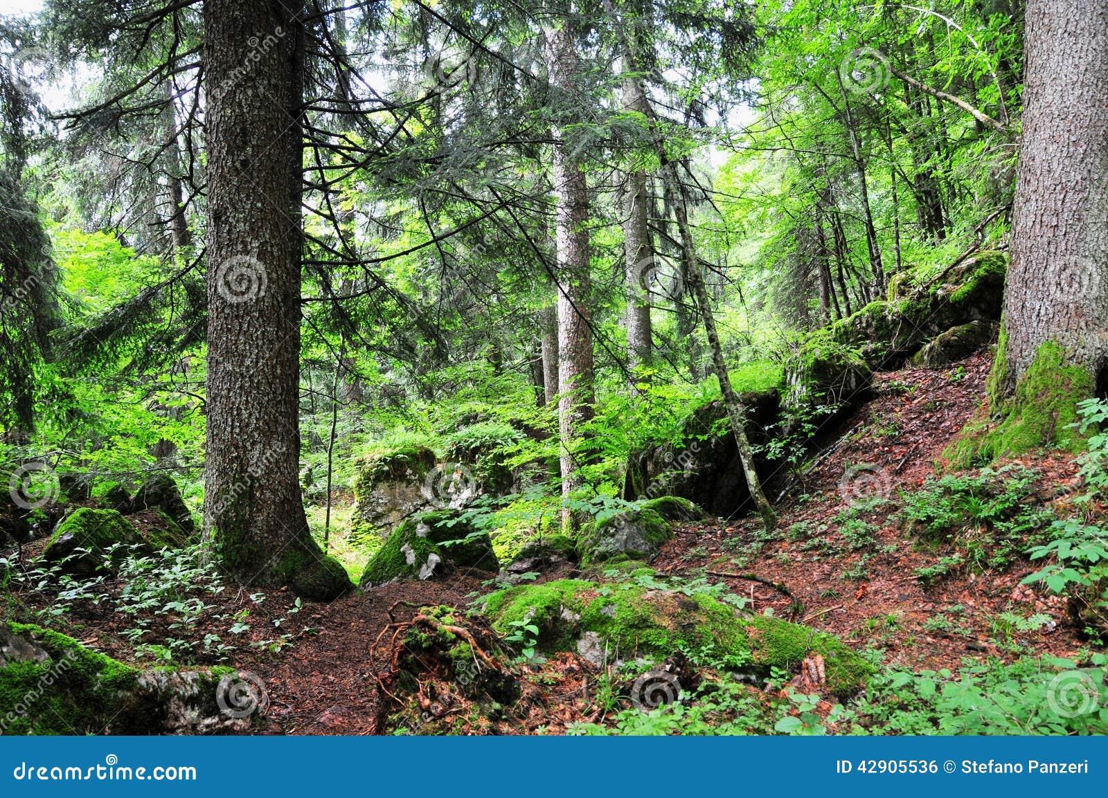 Italiano Forest Stock Photo Image Of Holiday Europe