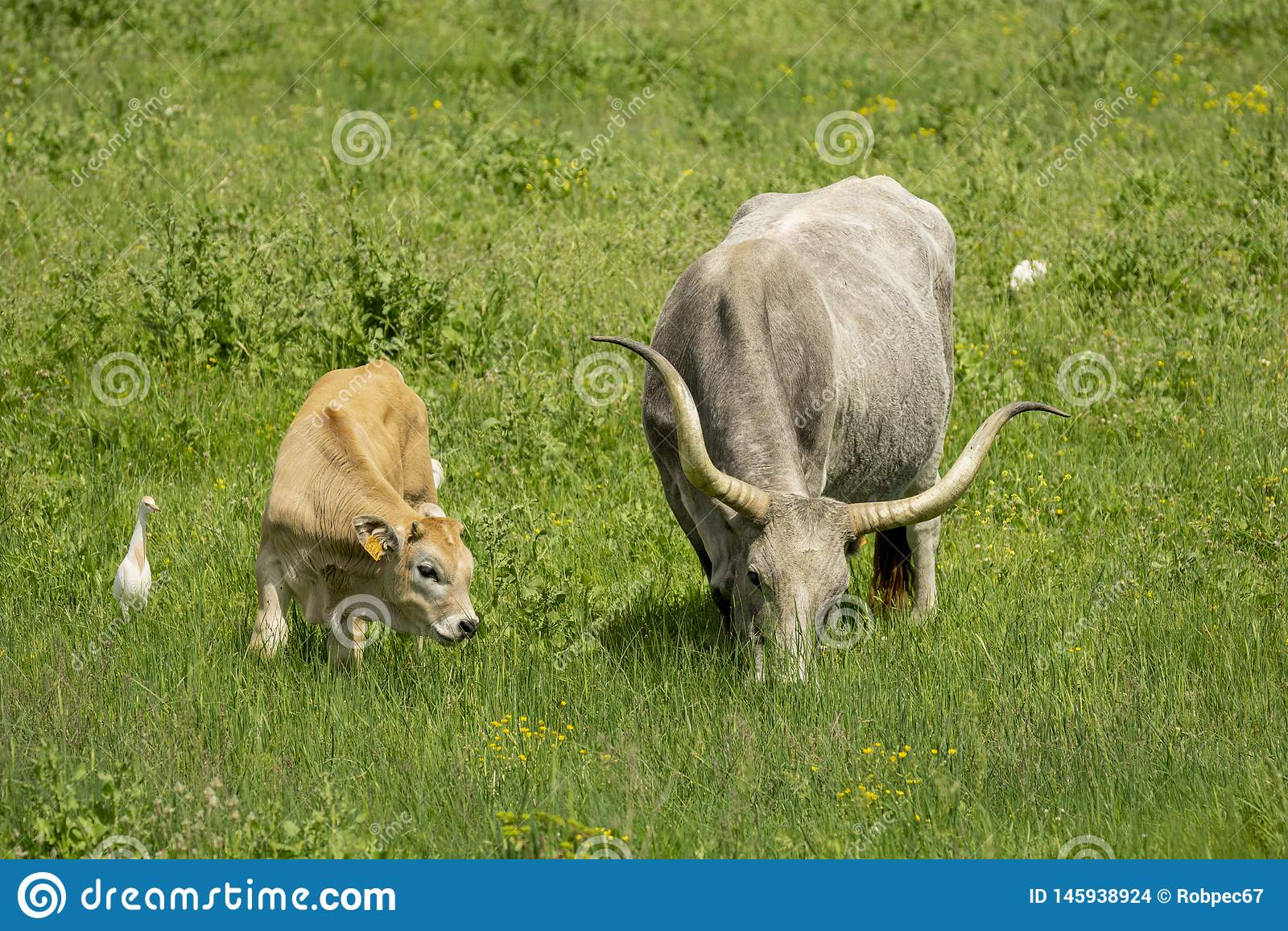 Italien Toskana Grosseto, Naturpark der freien Tiere Maremma-Naturreservat Alberese Uccellina
