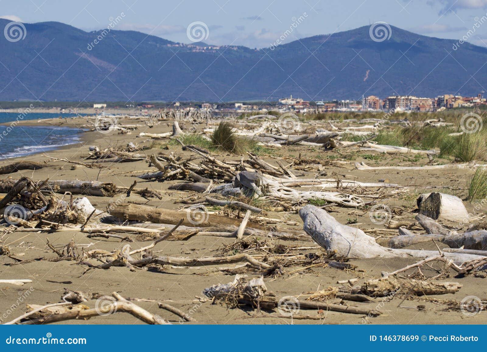 Italien Toskana Maremma, auf dem Strand in Richtung zu Bocca di Ombrone, Ansicht der K?stenlinie, im Hintergrund Marina di Grosse