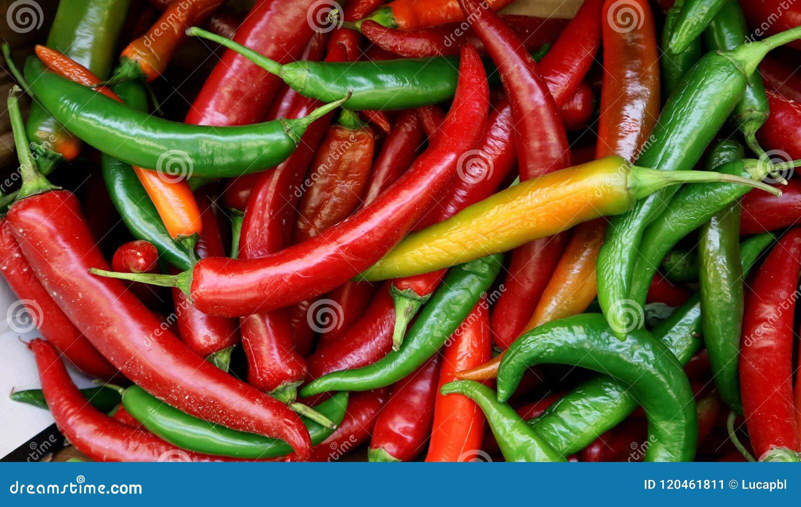 Italienische lange Peperoni oder italienische lange hots, gerade ausgewählt in einem Korb