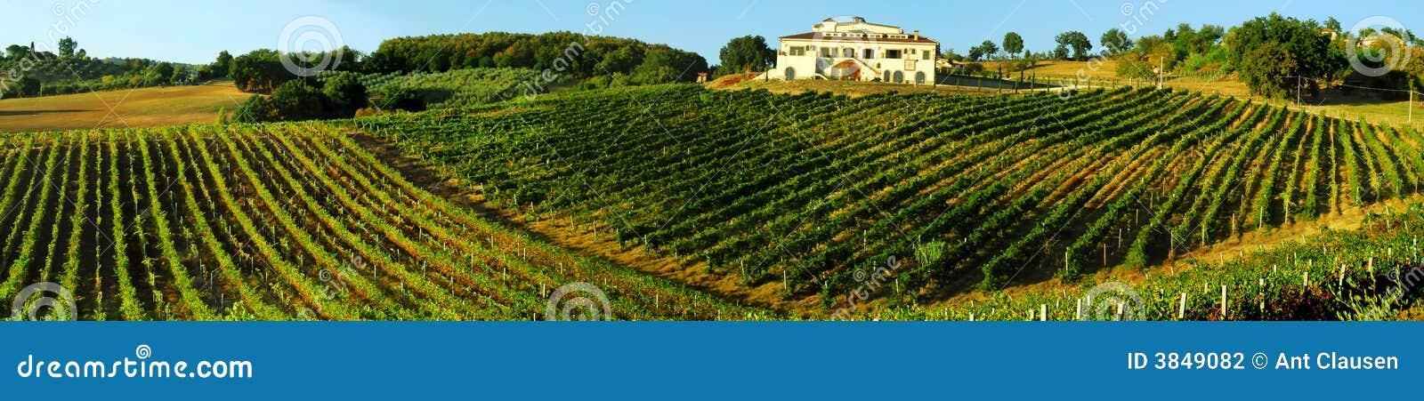 Italy vingård