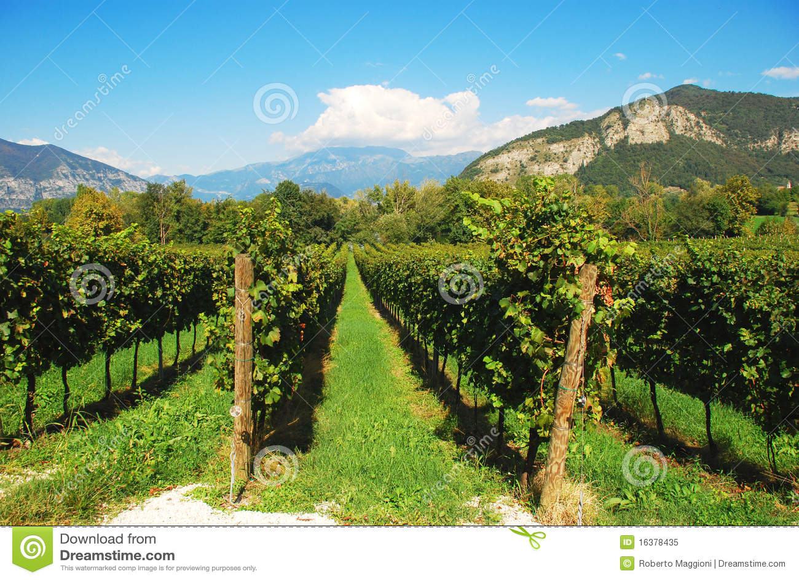 Italy winnica Lombardy