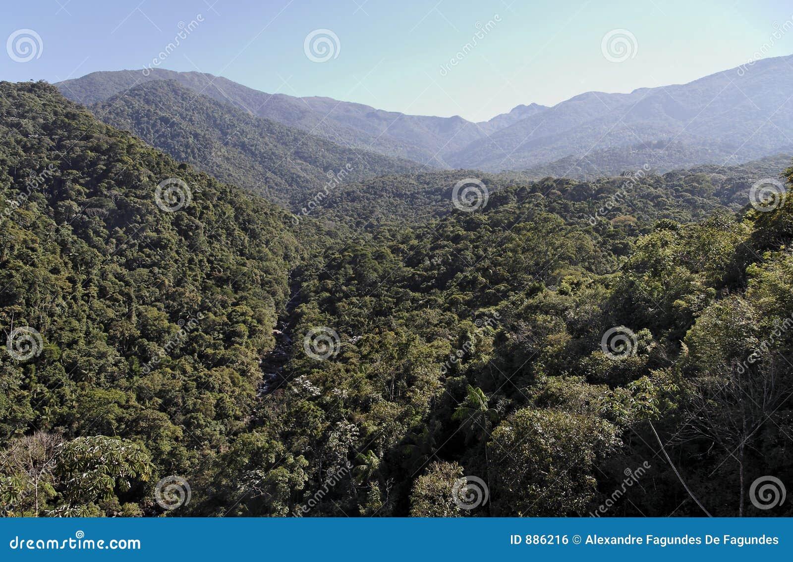 Itatiaia atlantica Floresta park narodowy