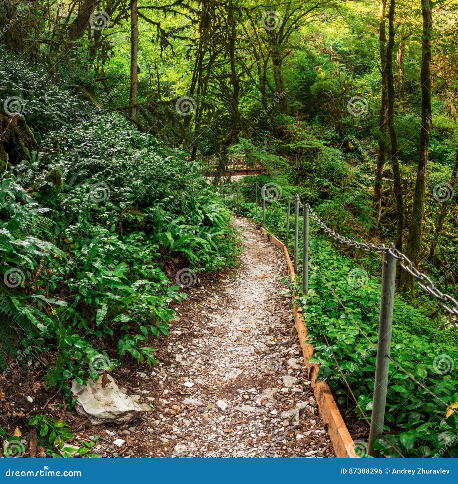 Itinerario turistico popolare nel boschetto del Tasso-legno di bosso nella riserva caucasica di biosfera, distretto di Soci, Russ