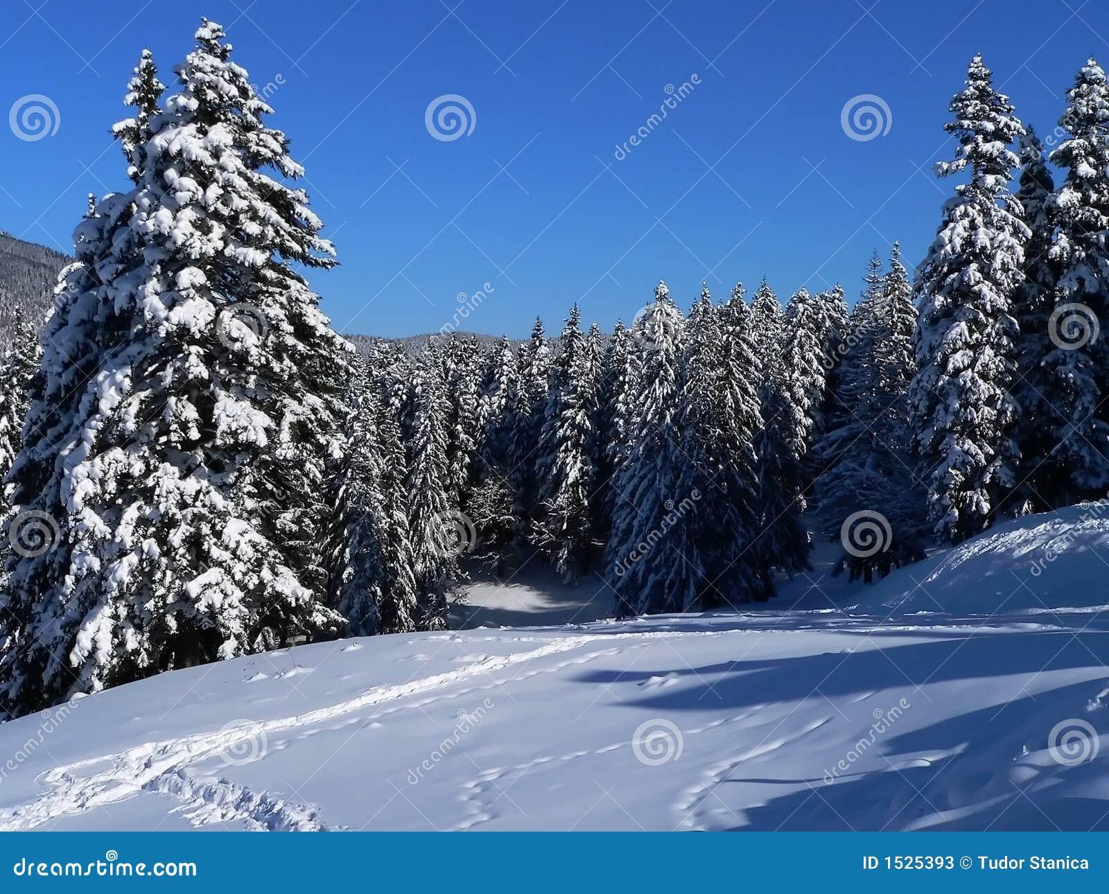IV χειμώνας τοπίων