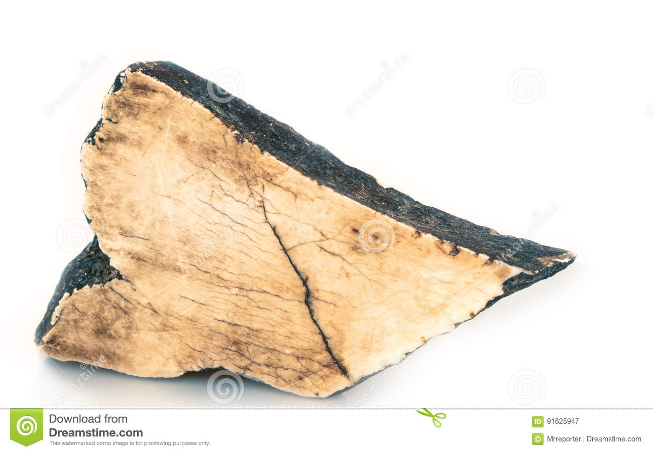 Ivory stock image  Image of fossilized, tusk, marble - 91625947