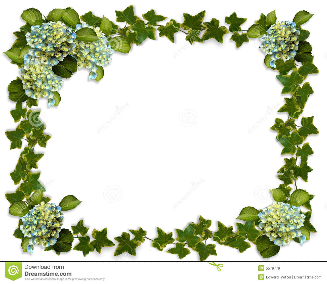 Ivy Border With Hydrangea Flowers Royalty Free Stock Images - Image ...
