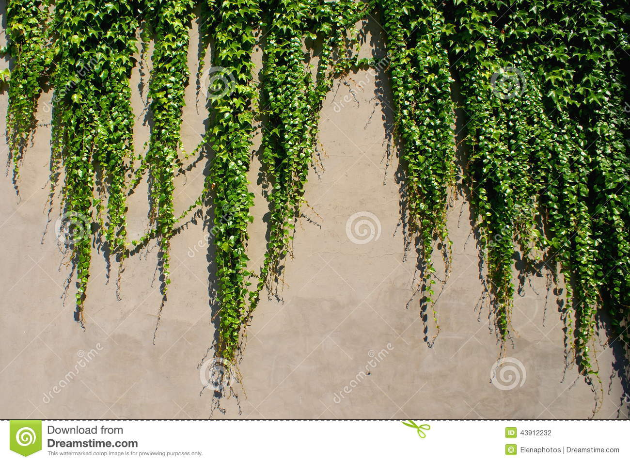 how to draw ivy on a wall