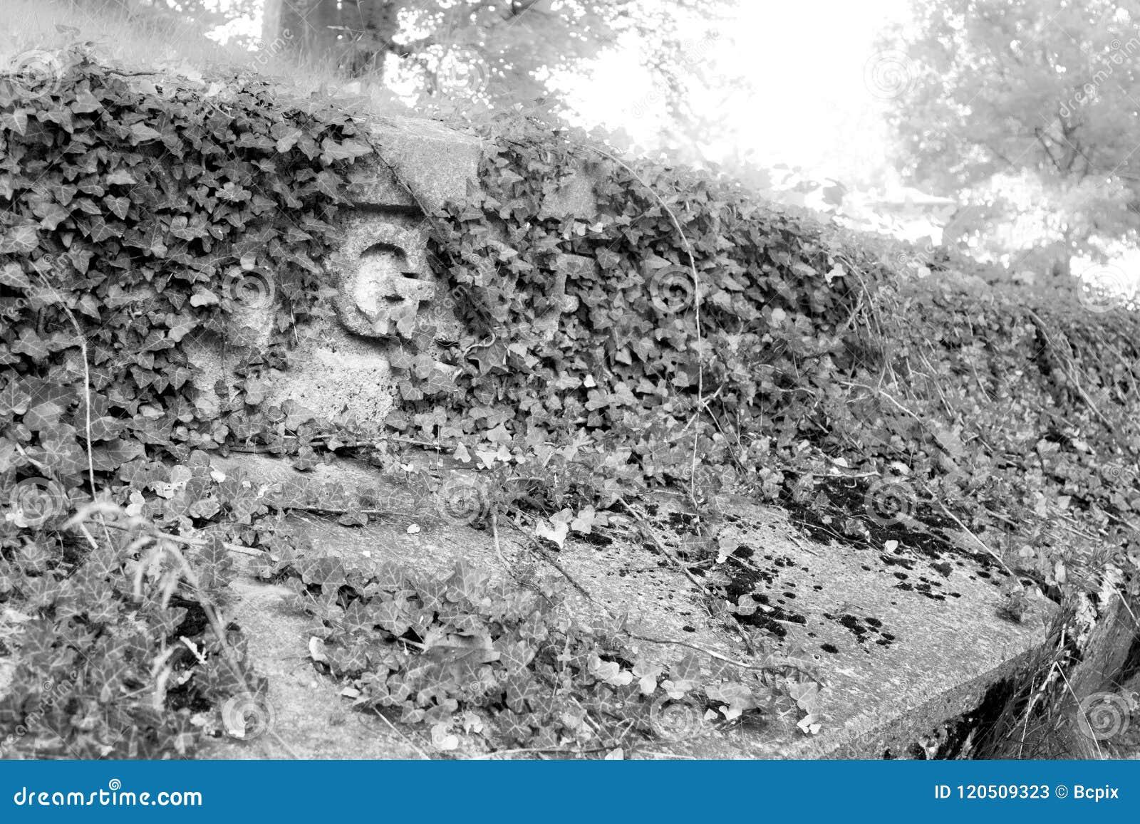 Ivy Covered Grave Marker à un vieux cimetière